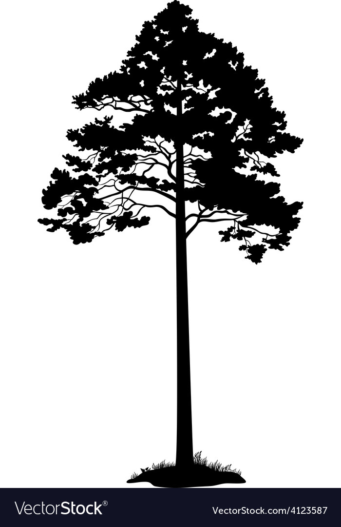 Pine tree black silhouette vector | Price: 1 Credit (USD $1)