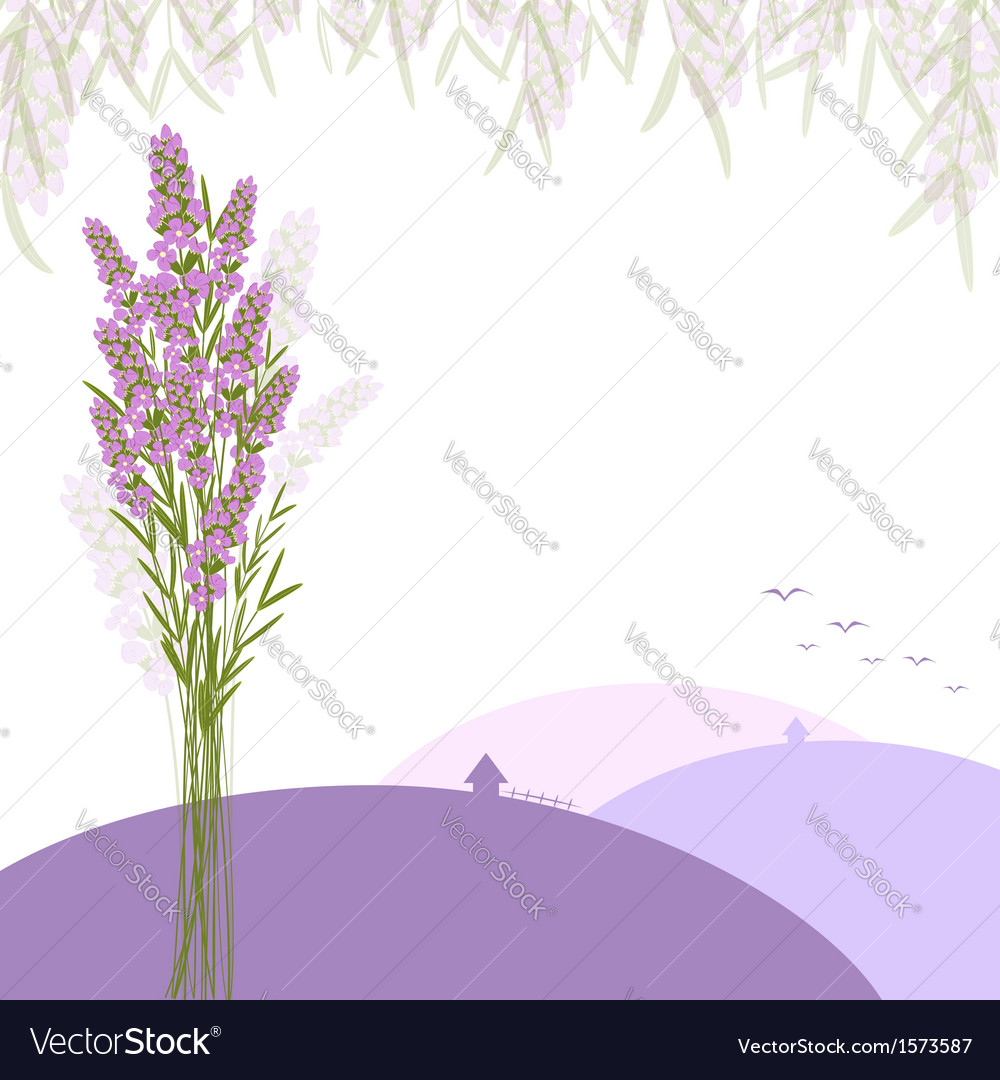 Purple lavender flower greeting card vector | Price: 1 Credit (USD $1)