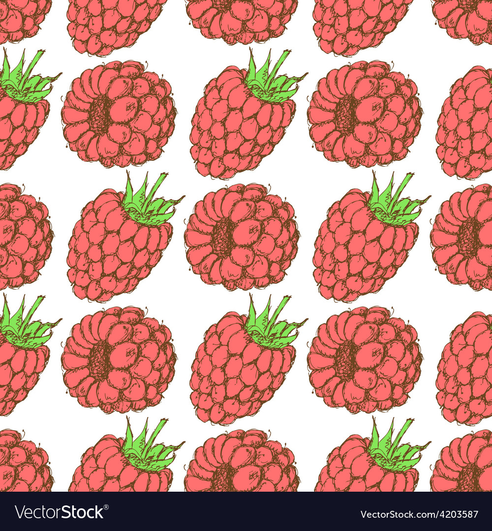 Sketch tasty raspberry in vintage style vector | Price: 1 Credit (USD $1)
