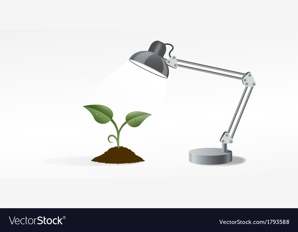 Lamp and sprout vector | Price: 1 Credit (USD $1)