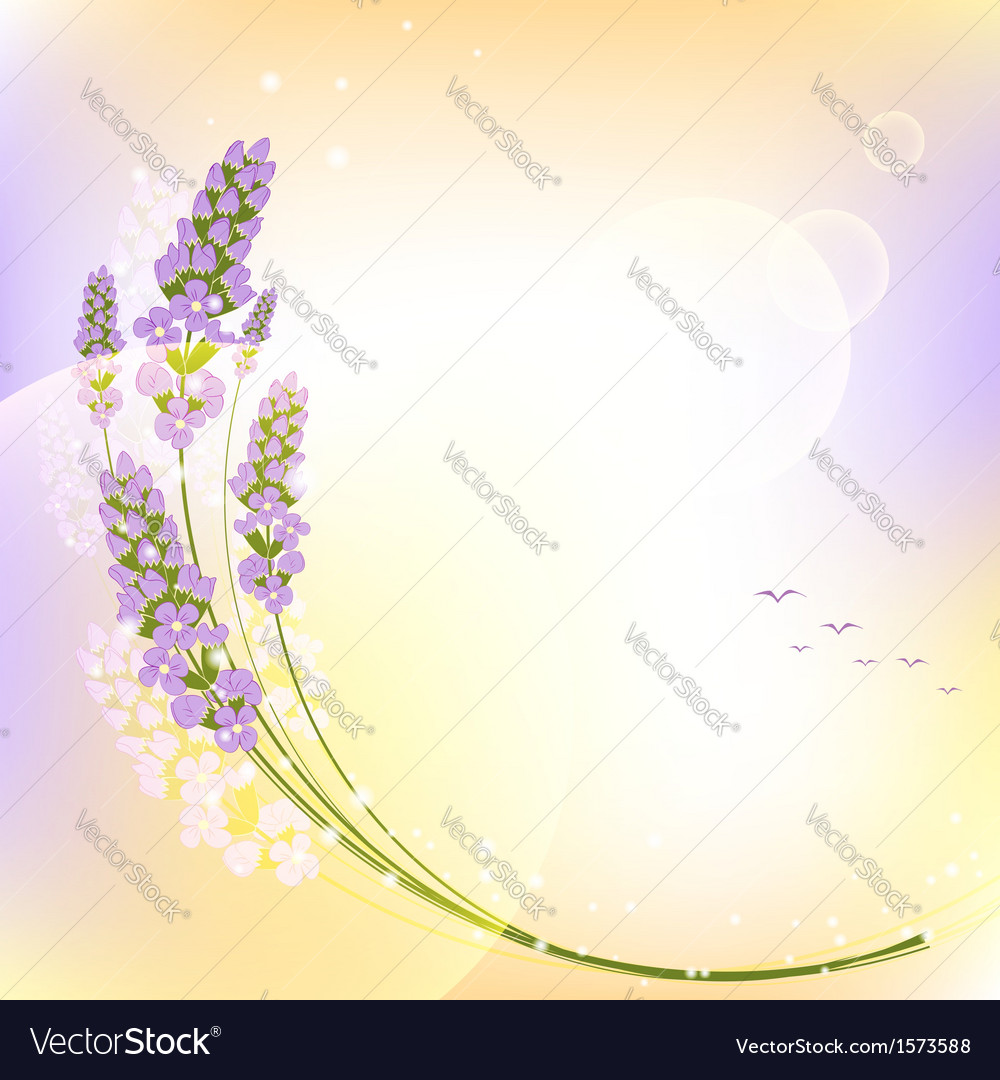 Purple lavender flower colorful background vector | Price: 1 Credit (USD $1)