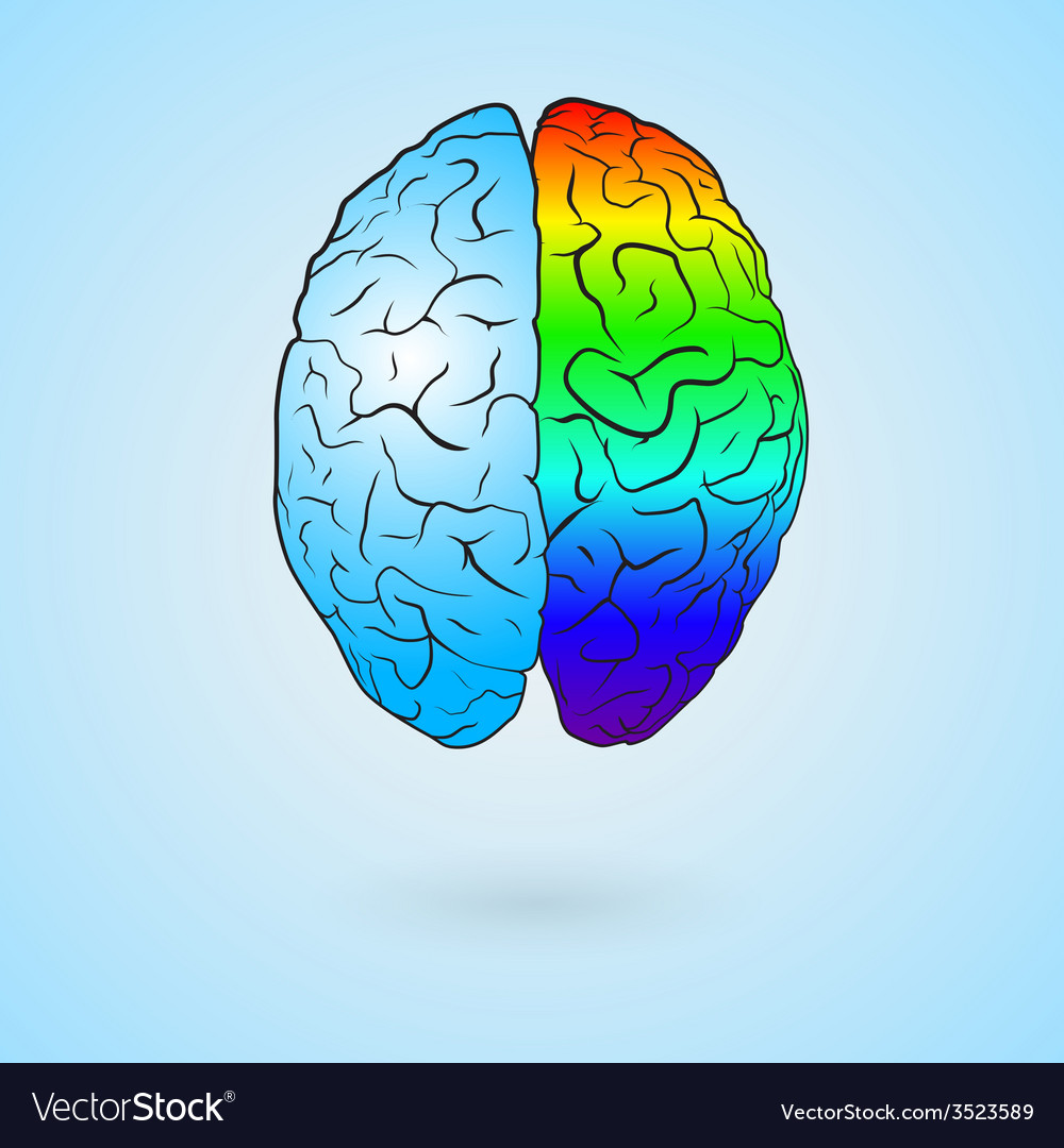 Colored left brain and right brain vector | Price: 1 Credit (USD $1)