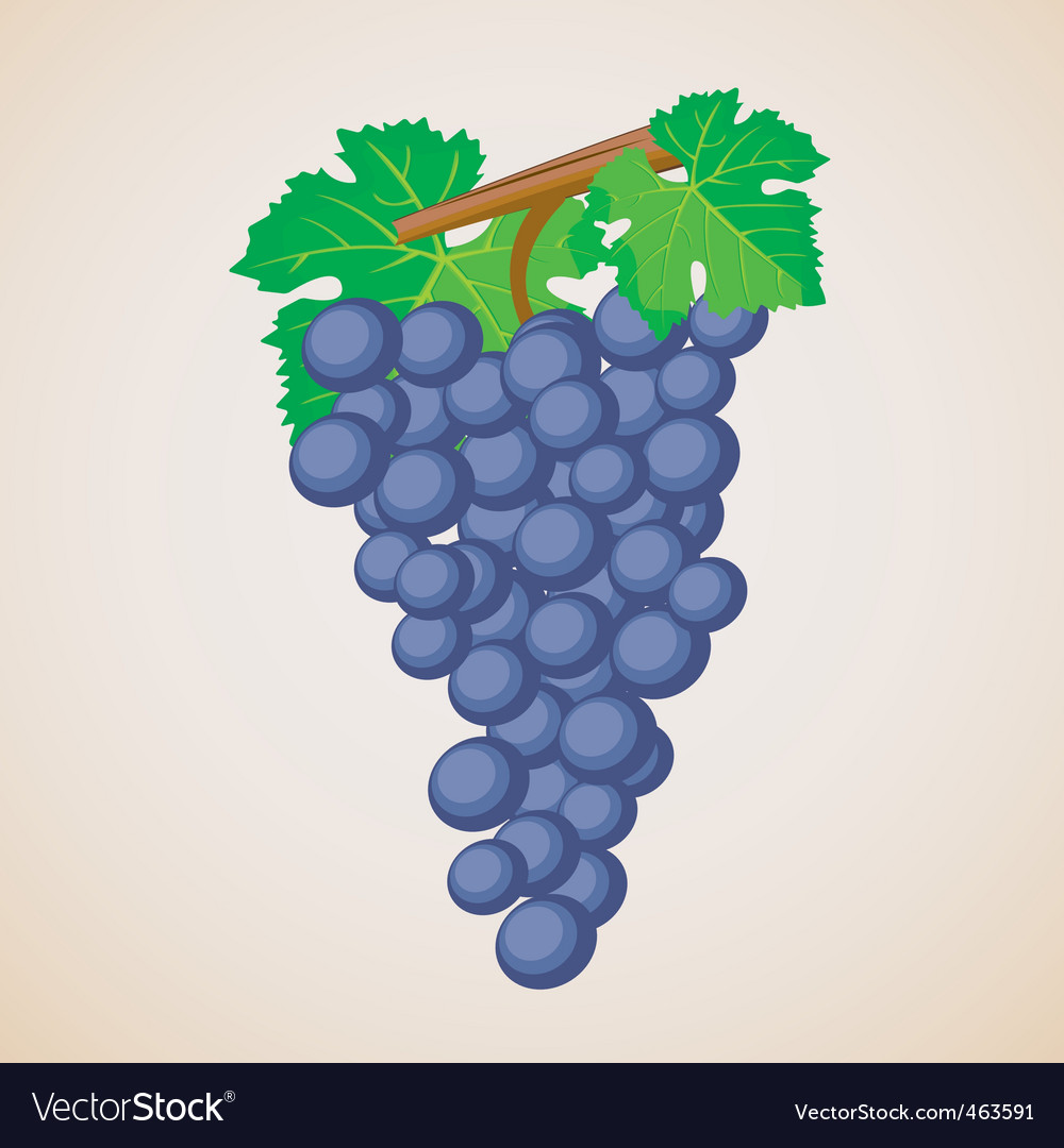 Grape fruit vector | Price: 1 Credit (USD $1)