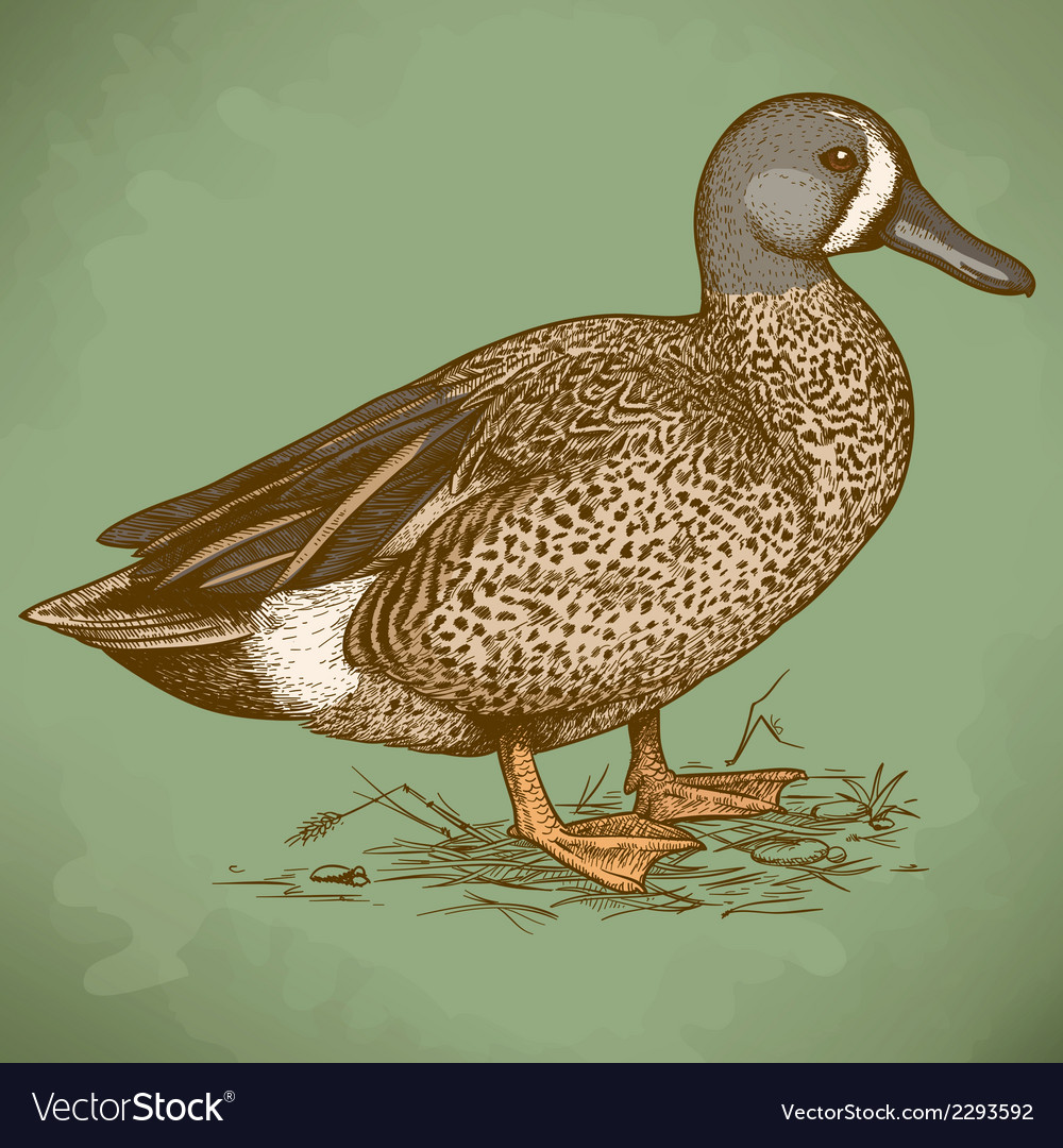 Engraving duck retro vector | Price: 1 Credit (USD $1)
