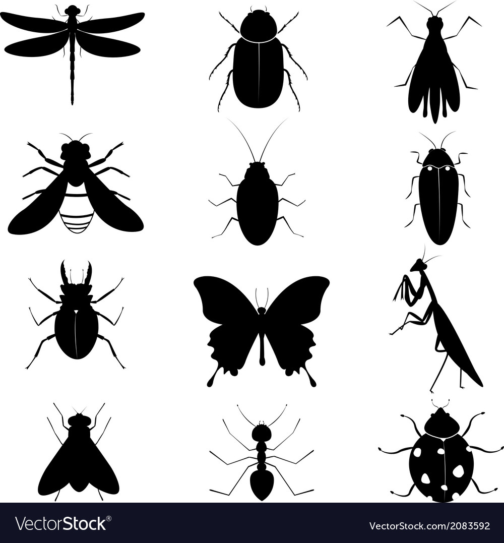 Insects silhouettes collection vector | Price: 1 Credit (USD $1)