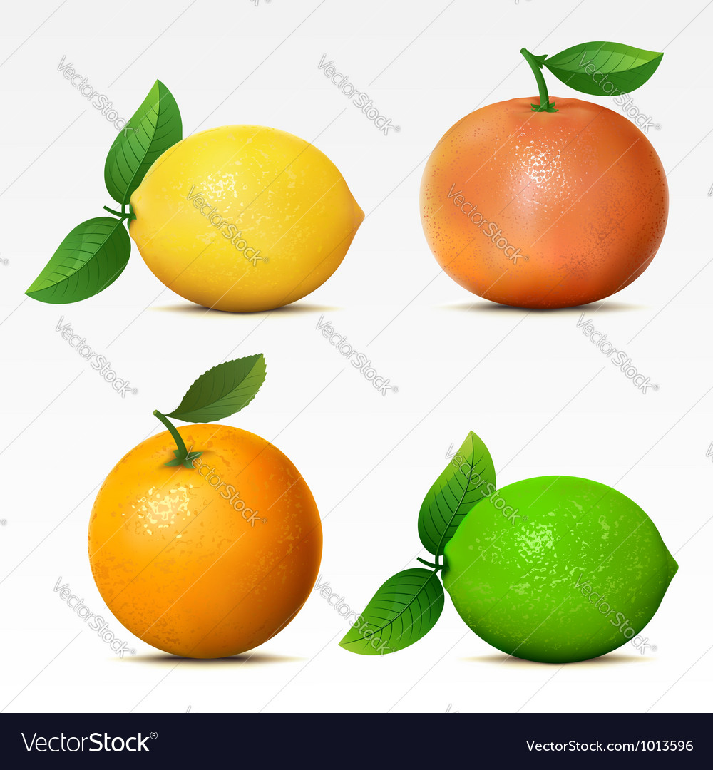 Collection of fruits vector | Price: 3 Credit (USD $3)