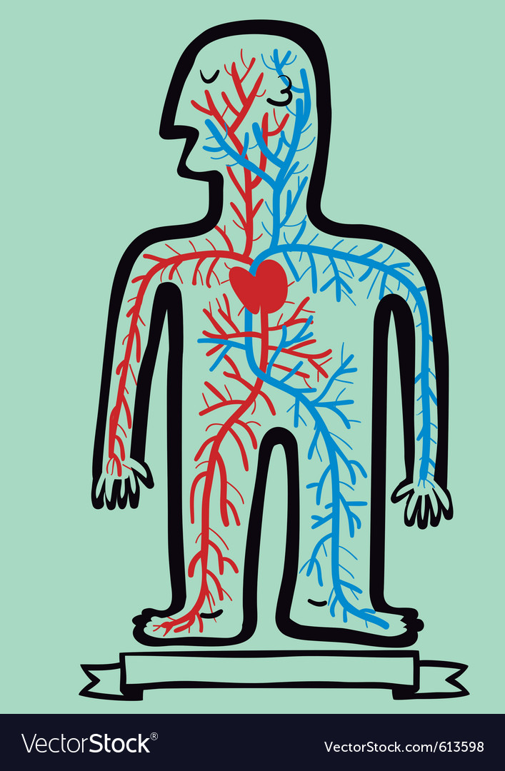 Human circulatory system vector | Price: 3 Credit (USD $3)