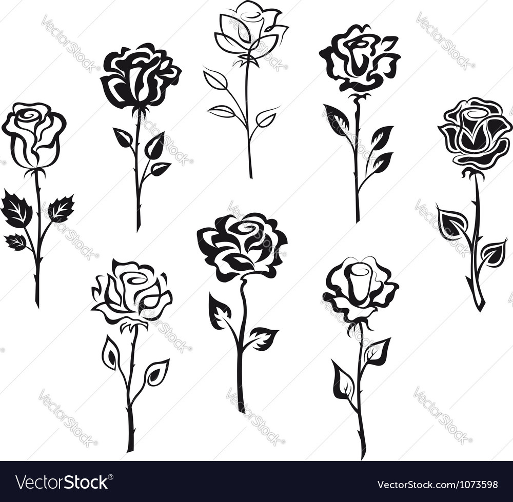 Set of rose flowers isolated on white background vector | Price: 1 Credit (USD $1)
