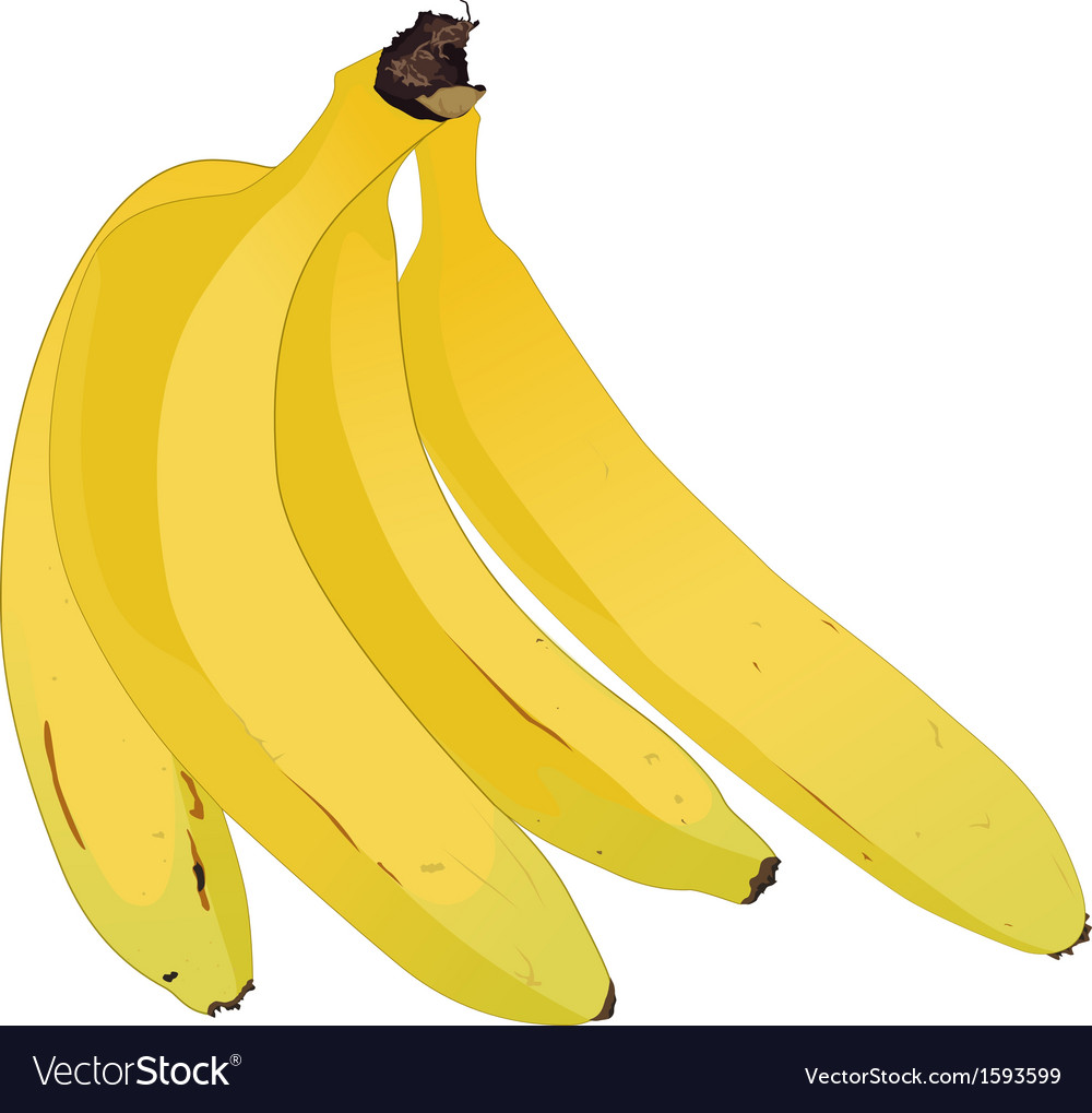 A bunch of lady finger bananas vector | Price: 1 Credit (USD $1)