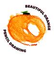 Hand drawn watercolor and pencil orange vector