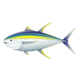 Yellowfin tuna vector