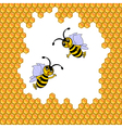 Two funny cartoon bees surrounded by honeycombs vector