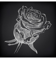 Black and white digital drawing sketch rose on vector