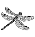 Detailed dragonfly pencil drawing style vector