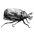 Detailed bug pencil drawing style vector