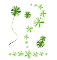 Beautiful foxtail fern leaves on white background vector