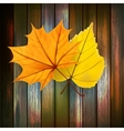 Autumn leaves over wooden background plus eps10 vector