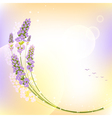 Purple lavender flower colorful background vector