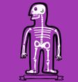 Human body bones vector