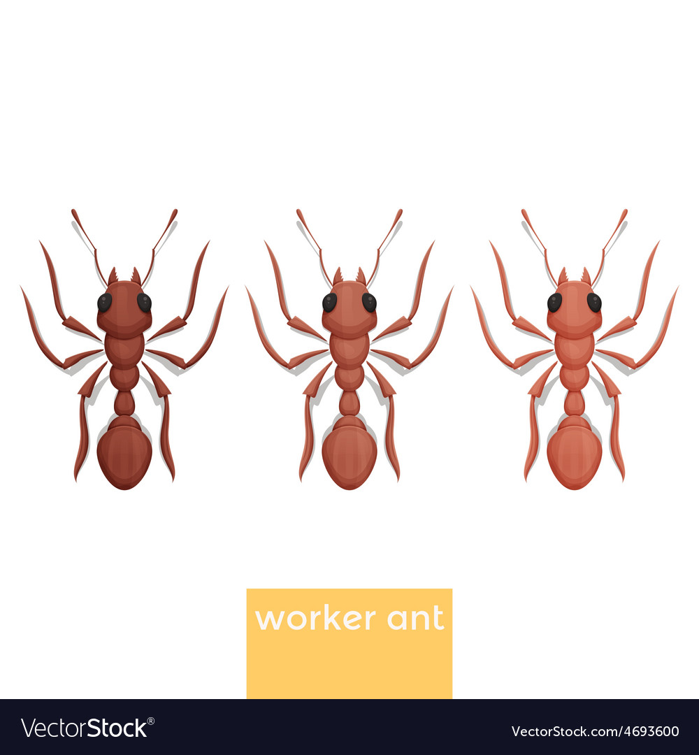 Worker ant vector | Price: 1 Credit (USD $1)