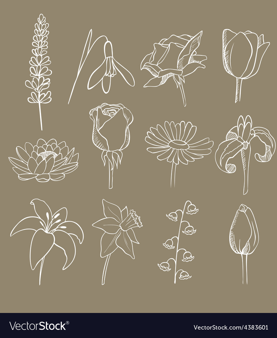 Many different flowers collection vector | Price: 1 Credit (USD $1)