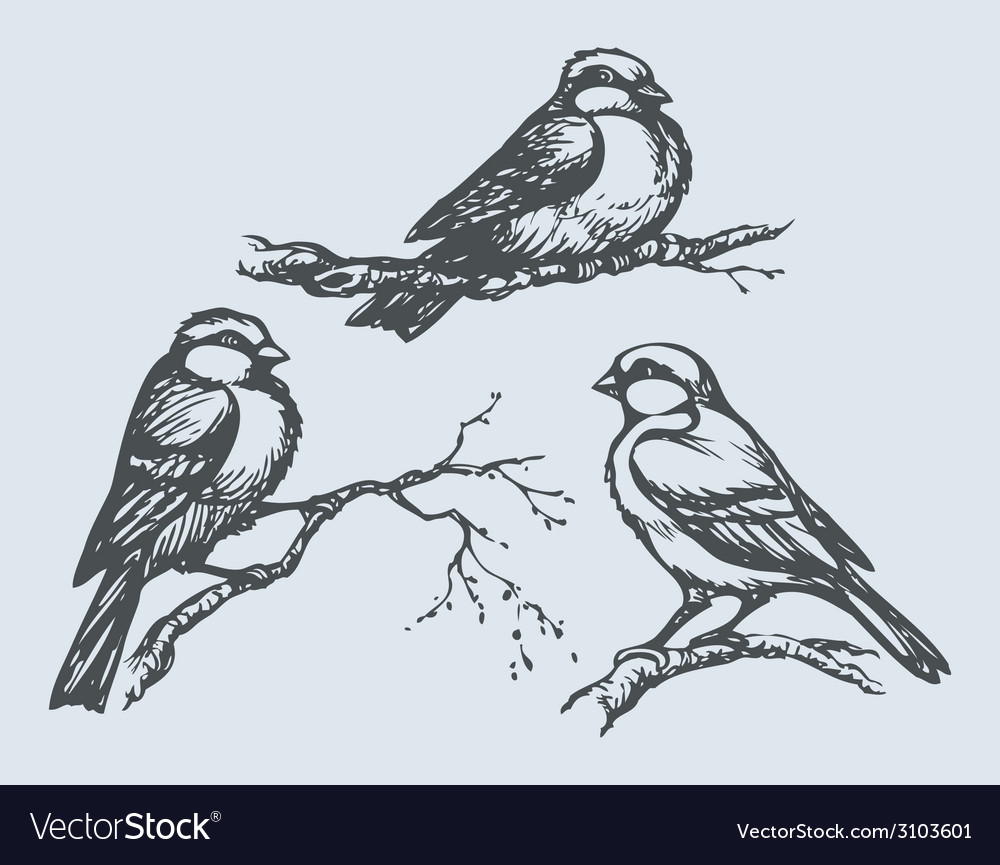 Tits on branches vector | Price: 1 Credit (USD $1)