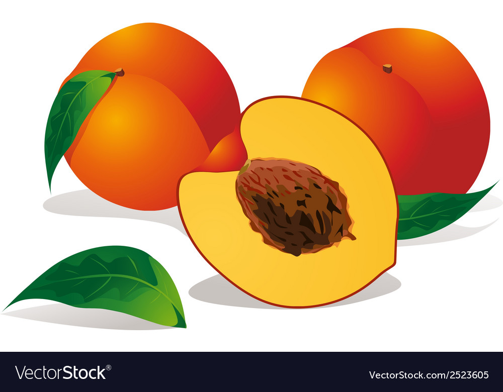 Peaches vector | Price: 1 Credit (USD $1)
