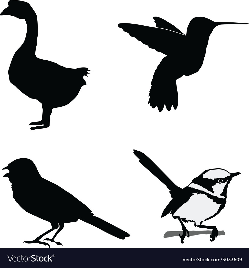 Birds of the world vector | Price: 1 Credit (USD $1)