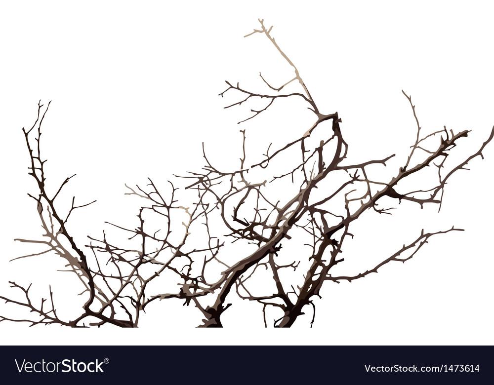 Branch vector | Price: 1 Credit (USD $1)