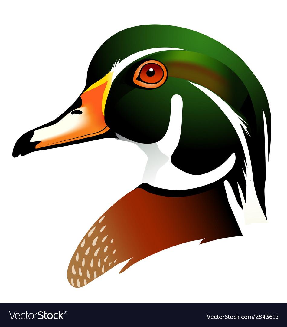 Wood duck vector | Price: 1 Credit (USD $1)