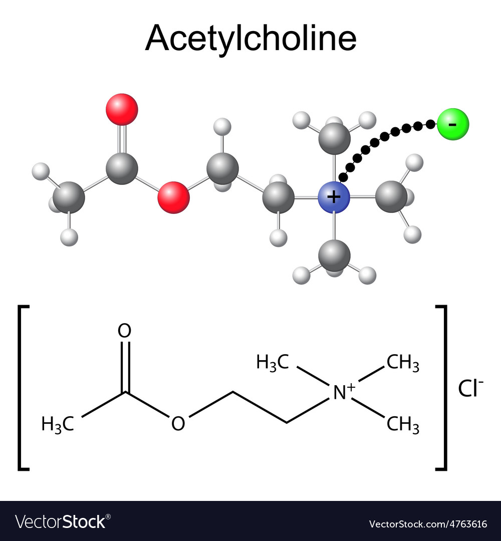 Chemical formula and model of acetylcholine vector | Price: 1 Credit (USD $1)