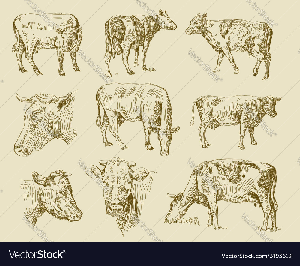 Cows hand draw vector | Price: 1 Credit (USD $1)