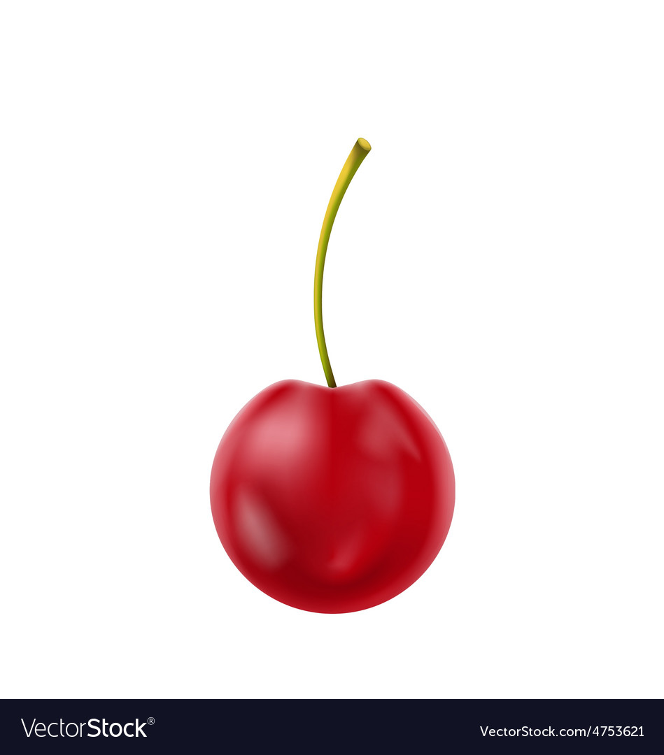 Single realistic cherry isolated on white vector | Price: 1 Credit (USD $1)