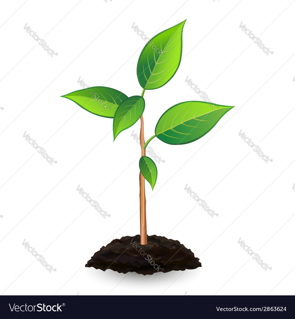 New green sprout and soil vector | Price: 1 Credit (USD $1)