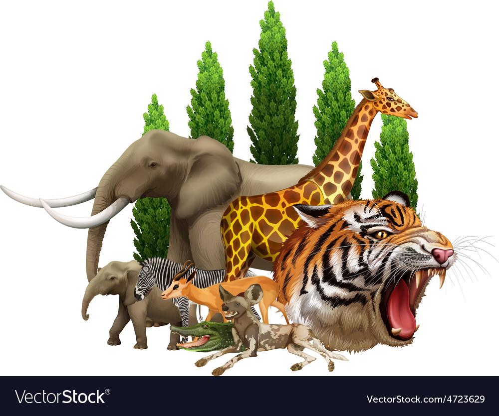 Wildlife vector | Price: 5 Credit (USD $5)