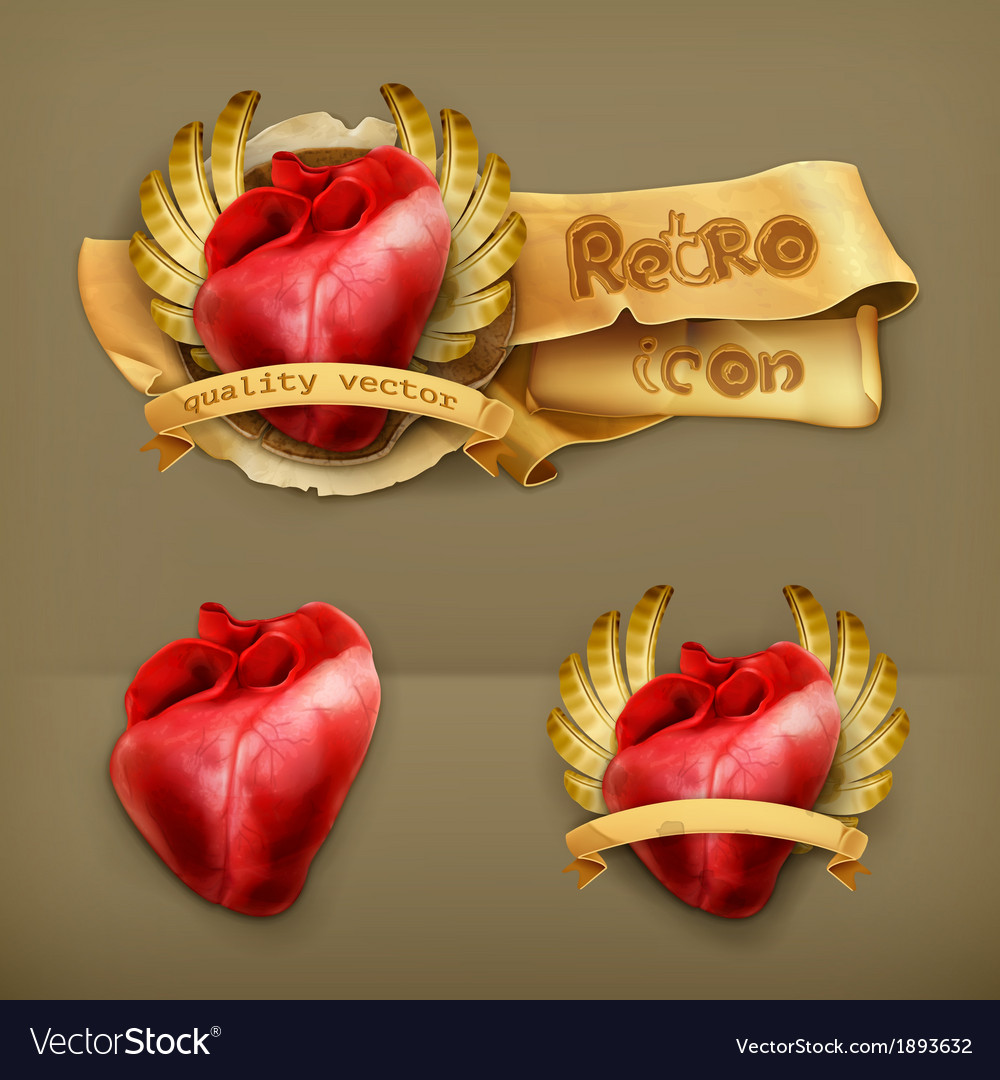 Human heart icon vector | Price: 1 Credit (USD $1)