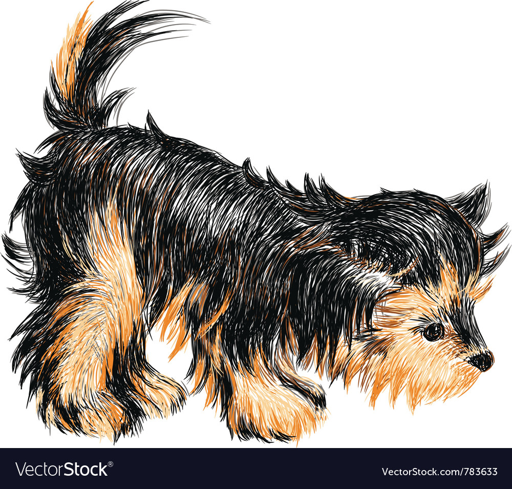 Yorkshire terrier puppy vector | Price: 1 Credit (USD $1)