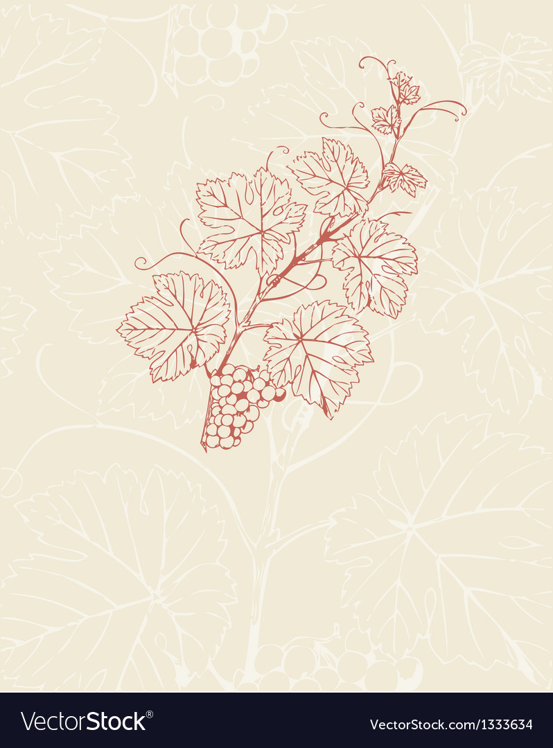 Vintage with grape branch vector | Price: 1 Credit (USD $1)