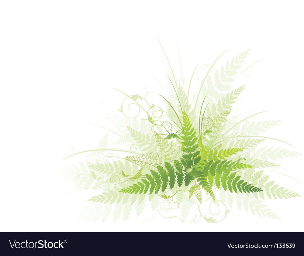 Fern vector | Price: 1 Credit (USD $1)