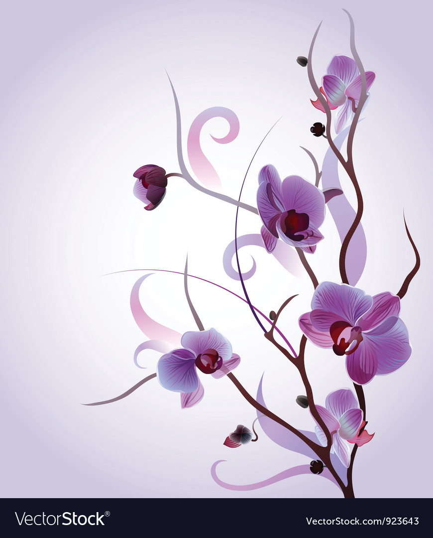 Greeting card with orchid brunch vector