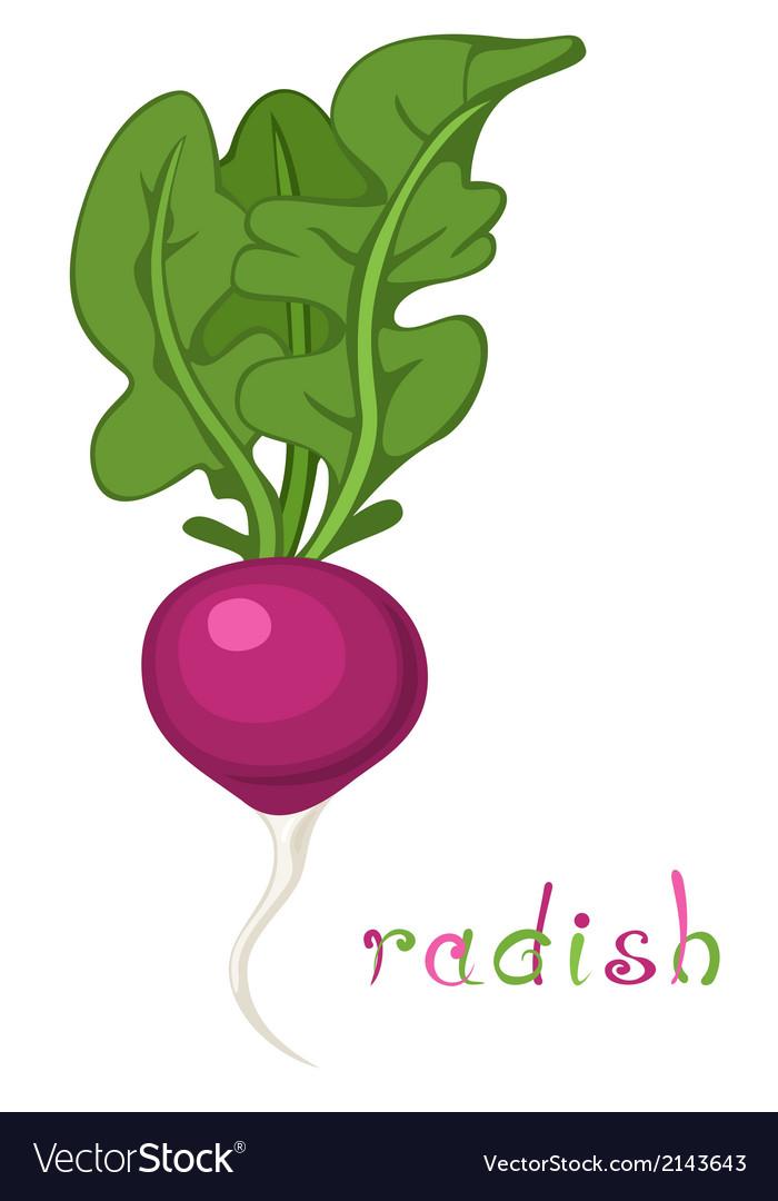 Radish vector   Price: 1 Credit (USD $1)