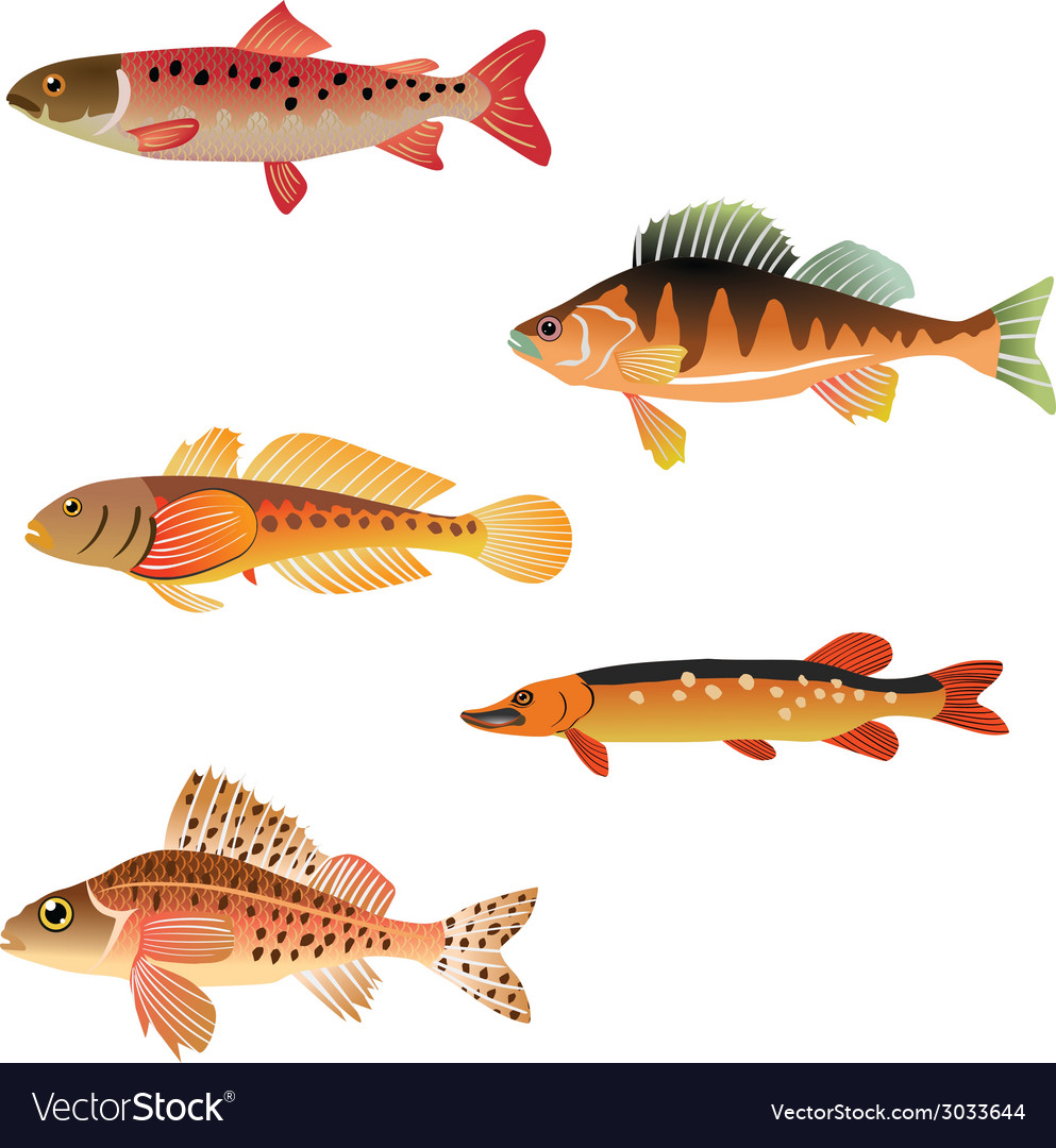 Animal aqua aquarium vector | Price: 1 Credit (USD $1)