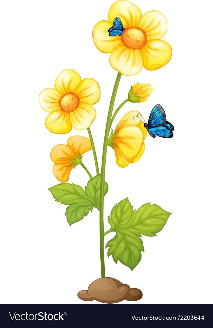 Fresh yellow flowers with butterflies vector | Price: 1 Credit (USD $1)