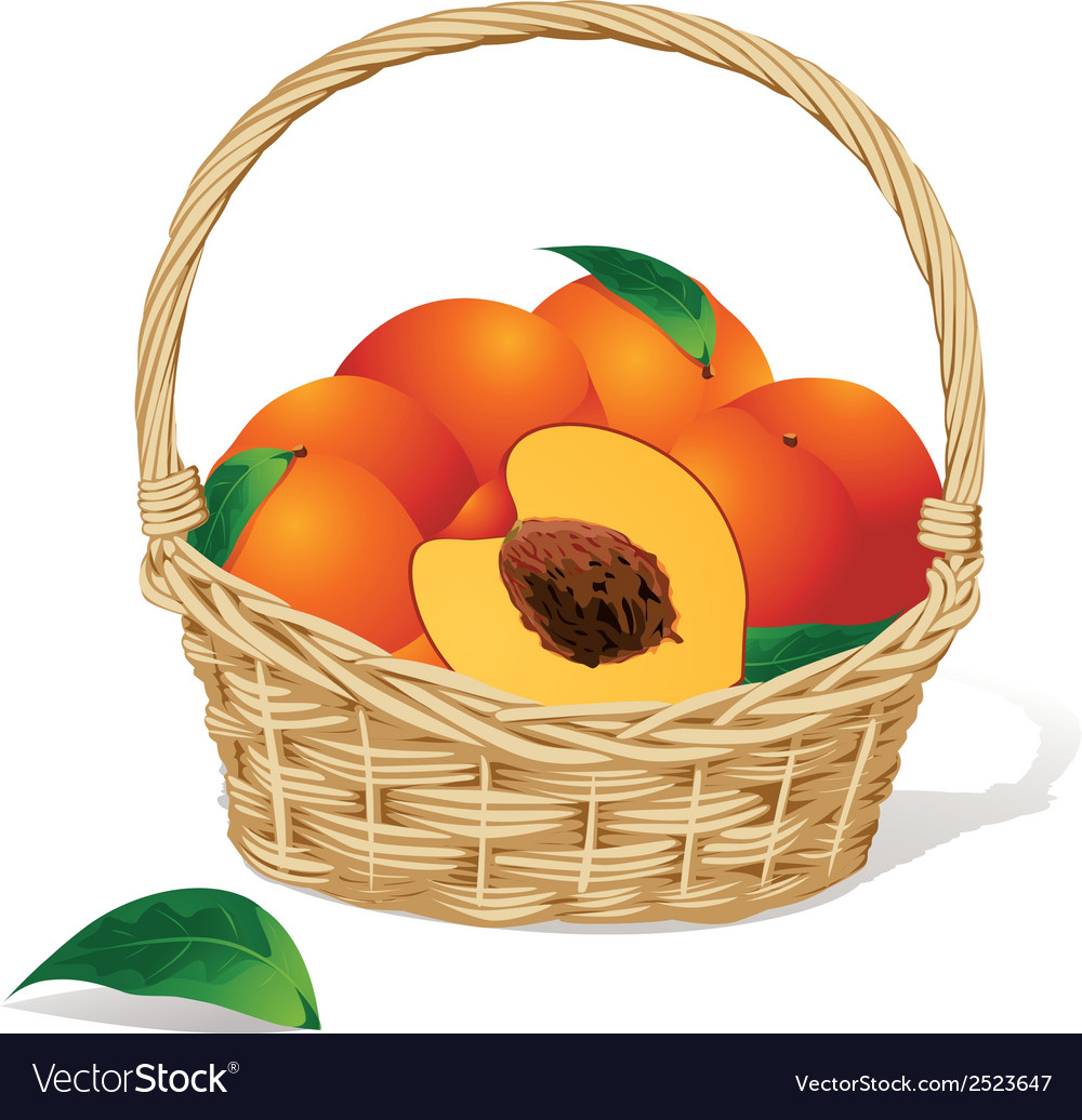 Basket of peaches vector | Price: 1 Credit (USD $1)