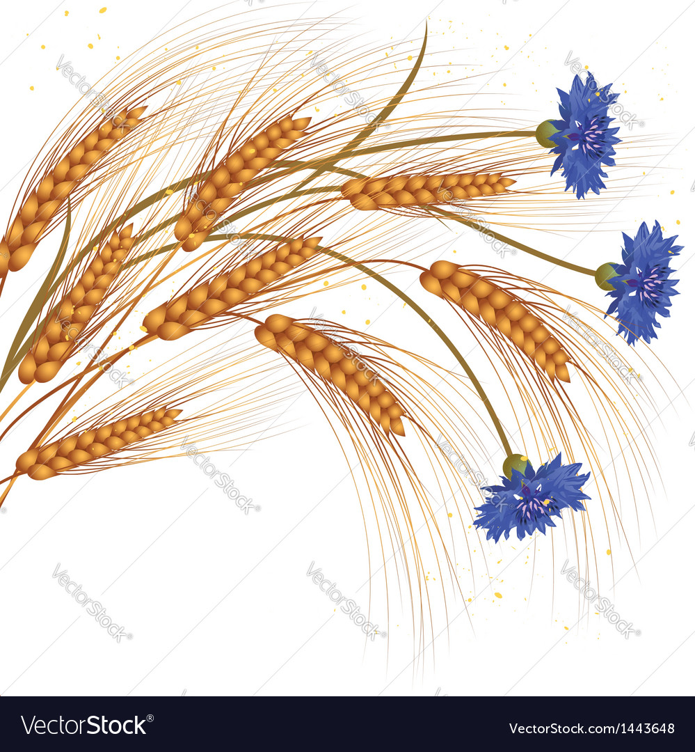 Flowers and ears of wheat vector | Price: 1 Credit (USD $1)