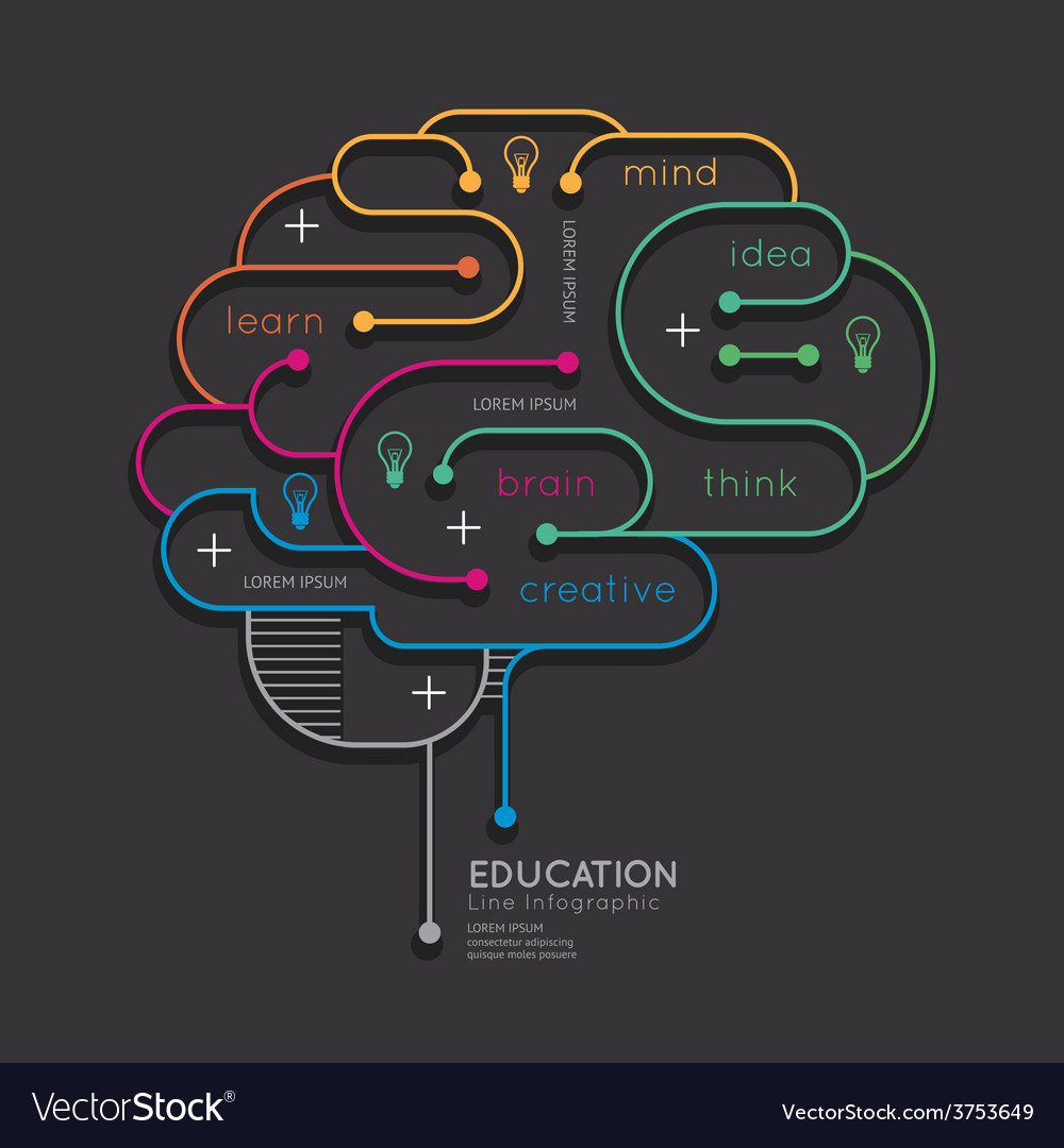 Flat linear infographic education outline brain vector | Price: 1 Credit (USD $1)