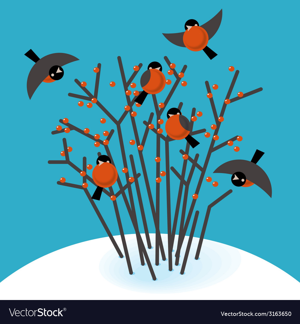 Bullfinch in the bushes vector | Price: 1 Credit (USD $1)