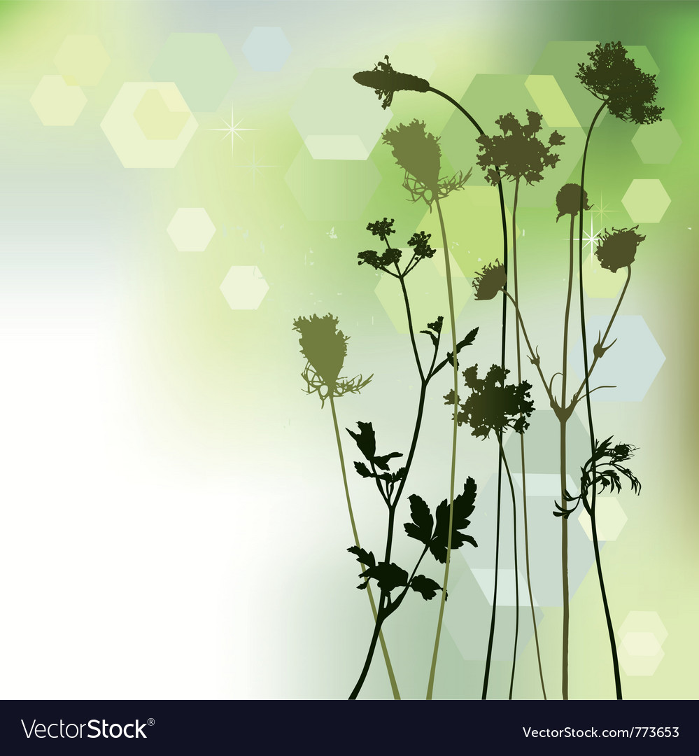 Floral background dandelion and herbal vector | Price: 1 Credit (USD $1)