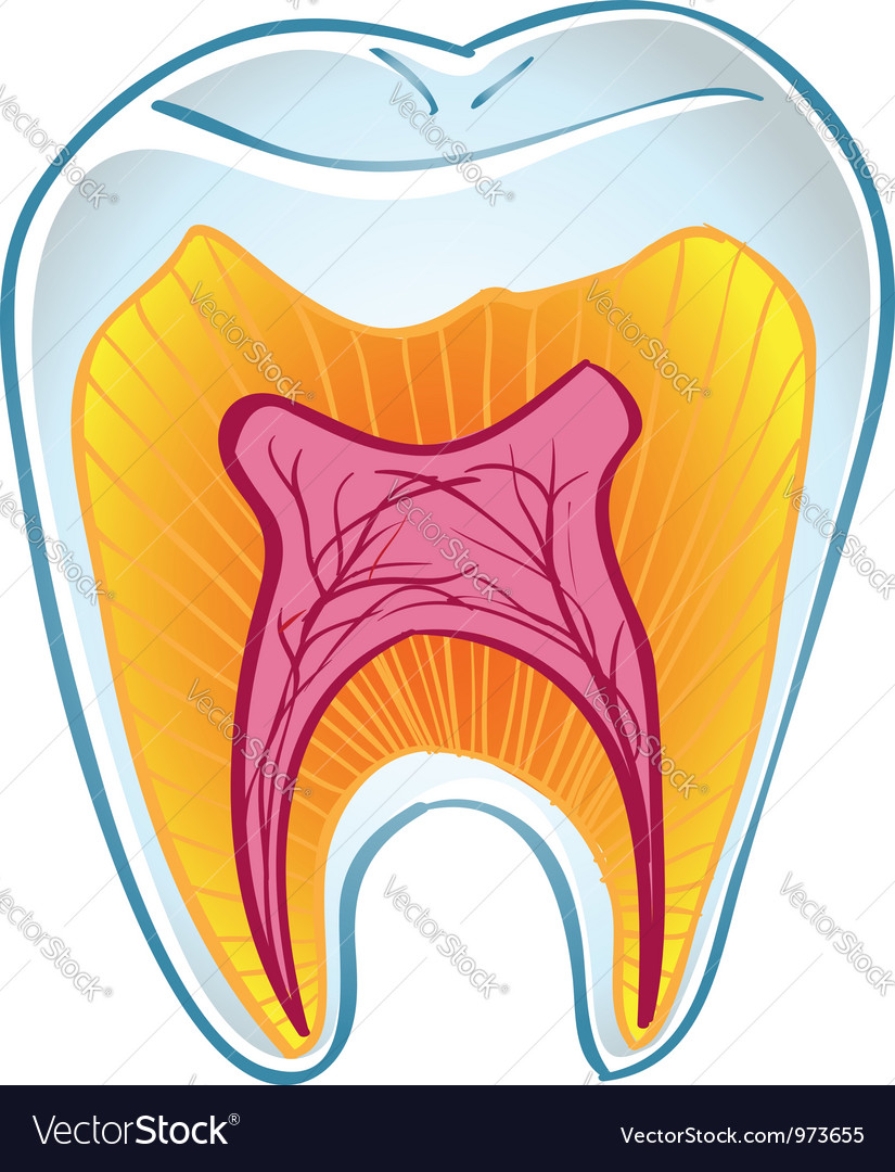 Teeth on section vector | Price: 1 Credit (USD $1)