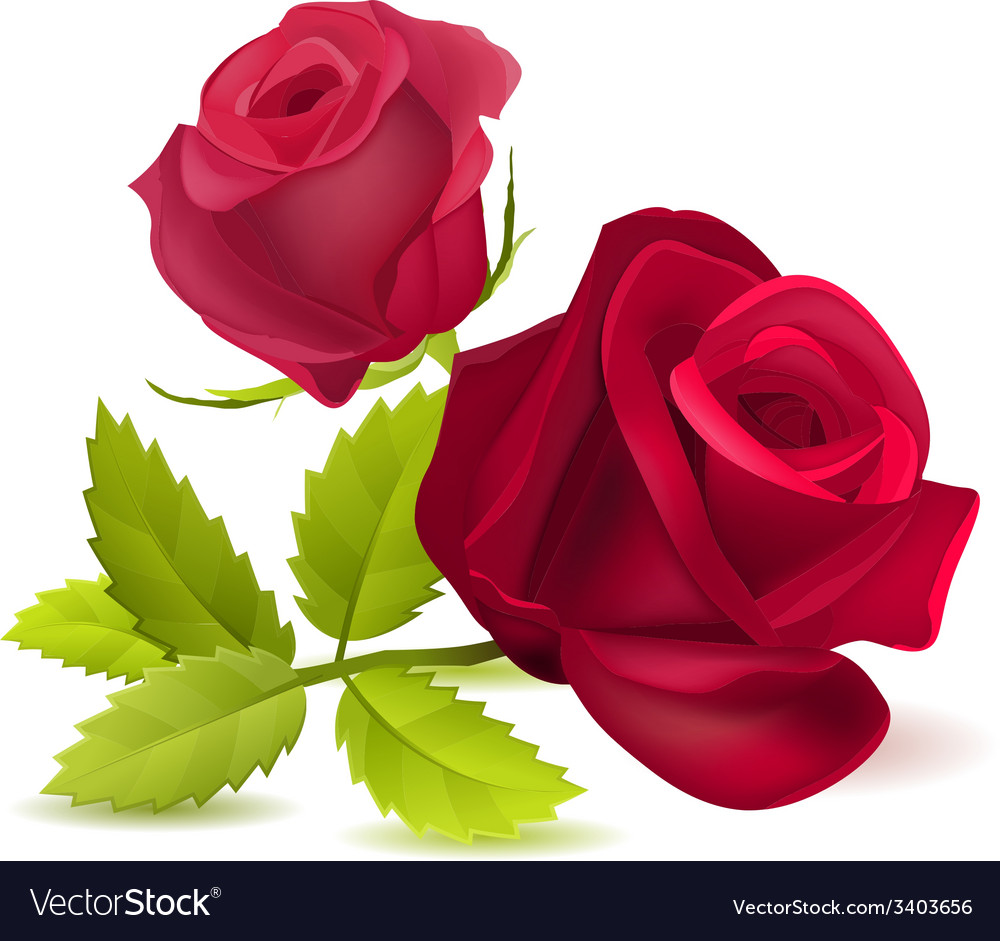 Realistic red rose on white vector | Price: 1 Credit (USD $1)